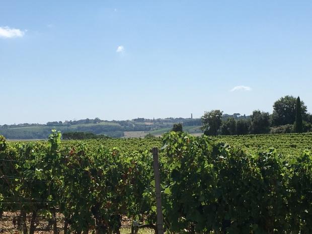 Toscane wijngaarden