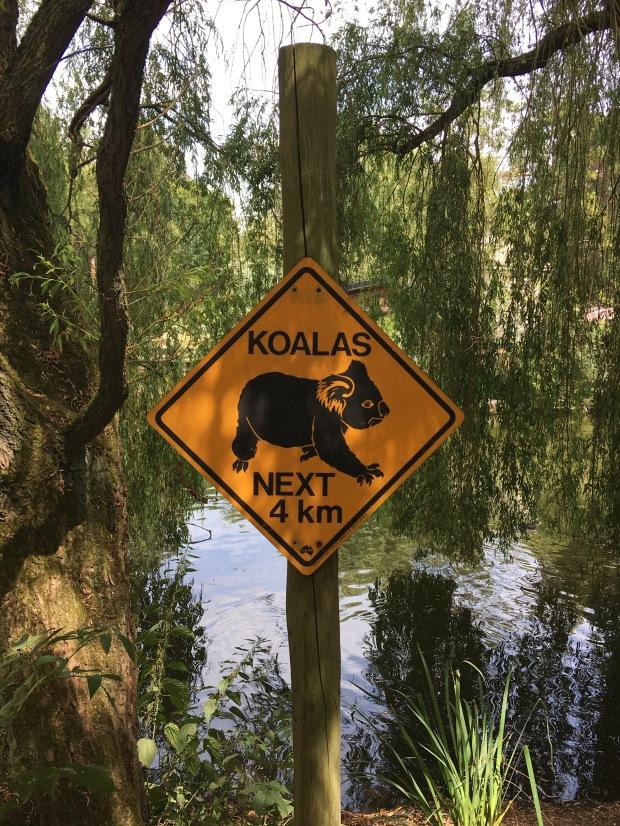 koala bord