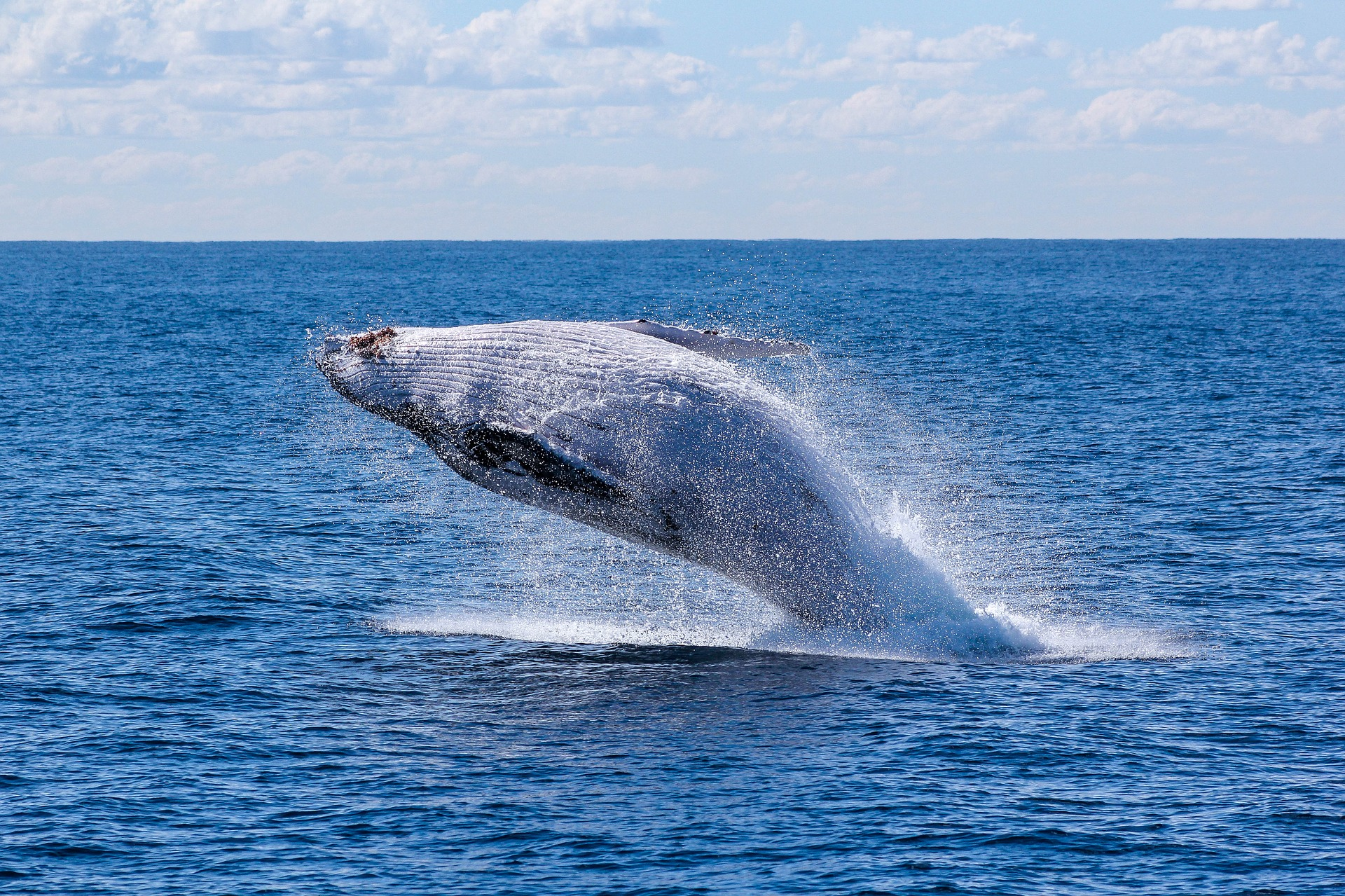 walvis springt